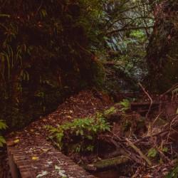 Wild Taranaki