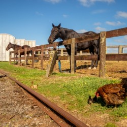 Family Fun with animals at Pioneer Village